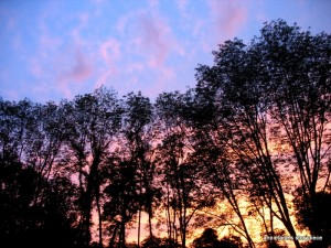 Blue light, pink sky