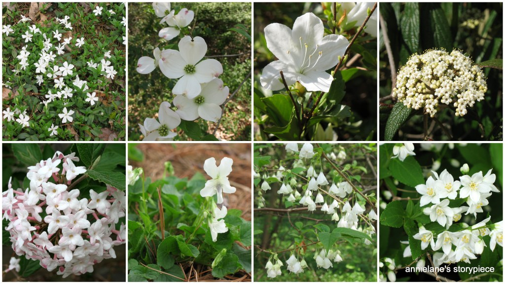 collage of white