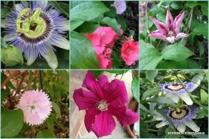 Tx garden flowers
