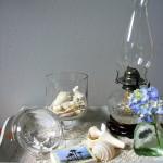 shells & stuff